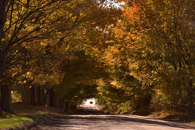 Country Road with Fall Foliage