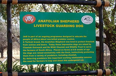 Info: Anatolian Shepherd.