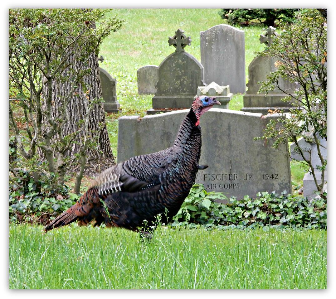 Mount Auburn Cemetery Turkey