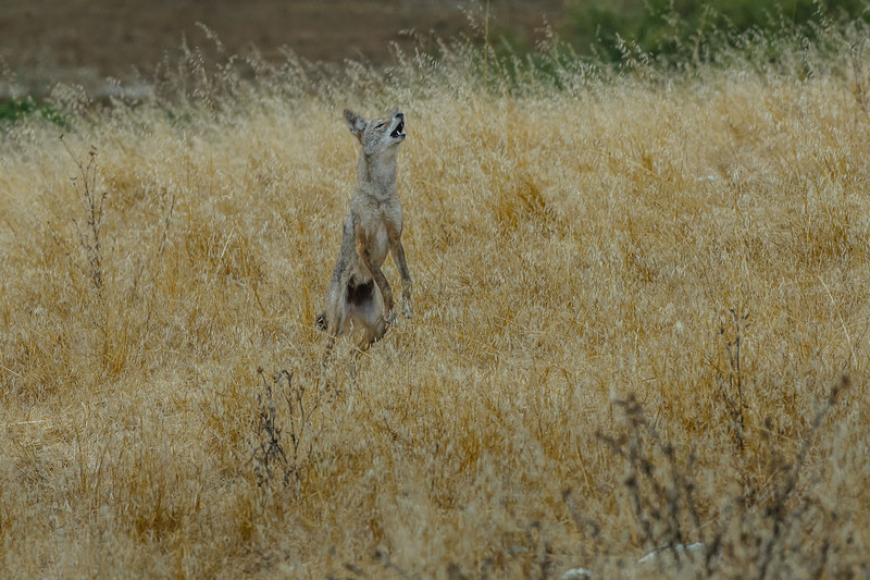 Mt. Burdell - August, 2012