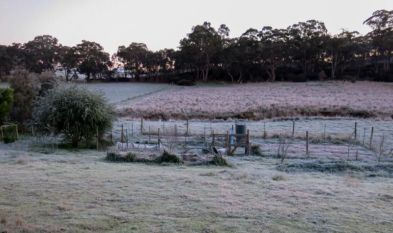 Frosty! Again.