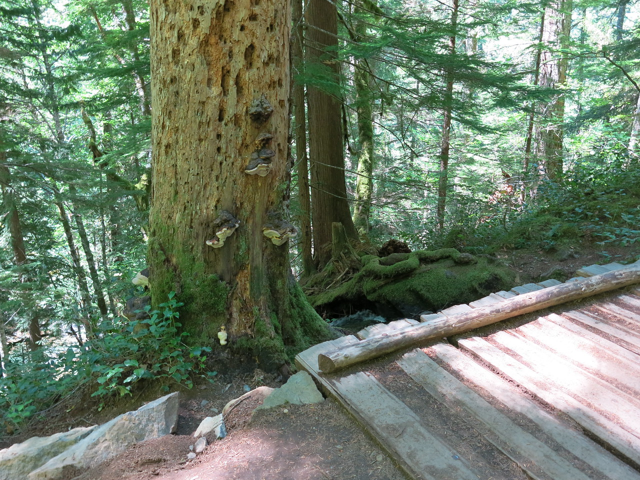 2016-08-10 hike (8)