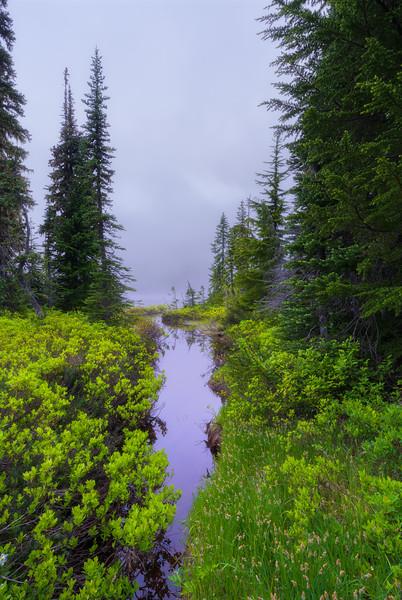 Early Morning - Mt Rainier