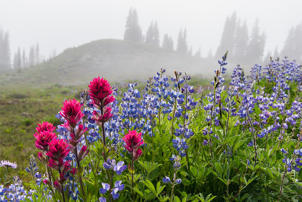 Mt. Rainier Wildflower Bouquet