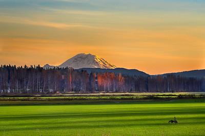Mount Rainier over Woodinville