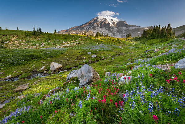 Mt. Rainier - Deadhorse Creek