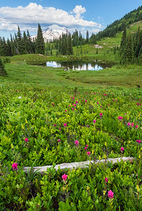 Rainier Paintbrush Meadow - Vertical