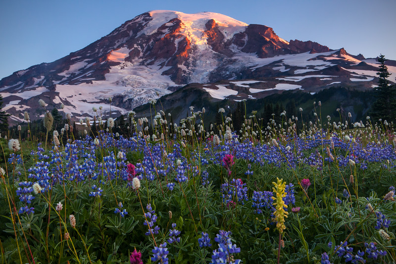 Mount Rainier and Flowers