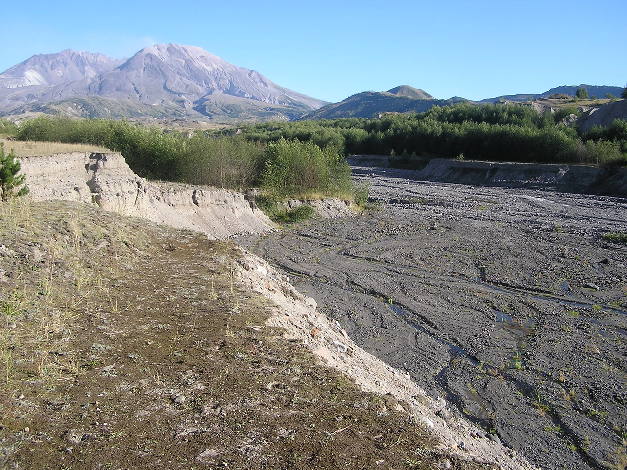 Looking upriver.  The river bed is 60 to 300 feet higher in elevation than before the May 18 eruption.  The eruption moved volcanic rock and ash down the river.