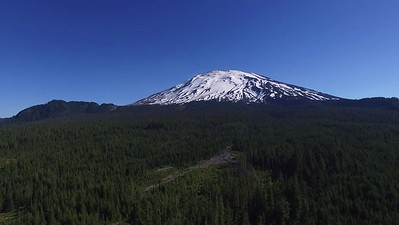 1-Rising above the trees at Mount St  Helens