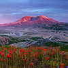 Mount St. Helens and Flowers
