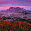 Mount St. Helens and Flowers at Sunset