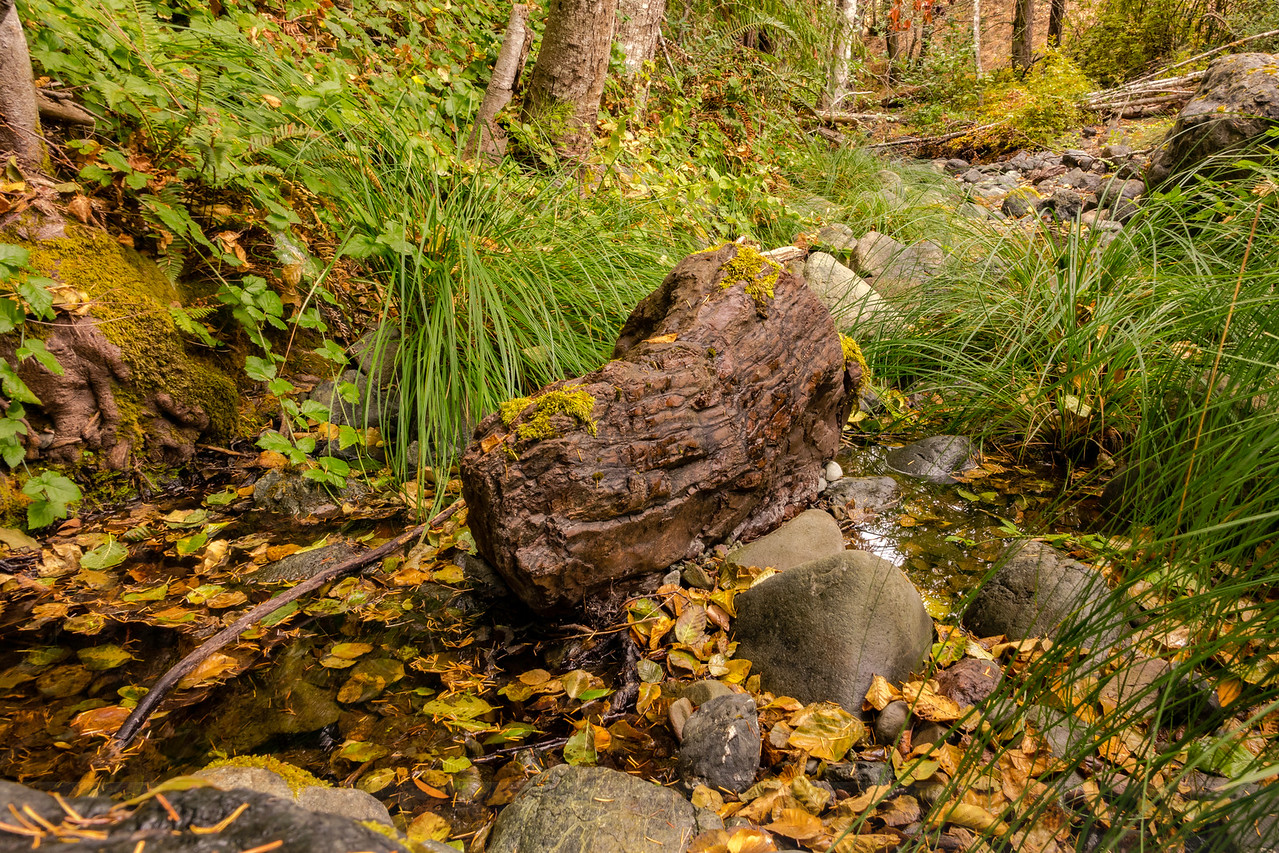 Big Carson Creek