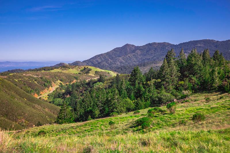 Mount Tam from Alpine Ridge