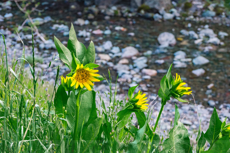 Mule's Ear in Cascade Canyon