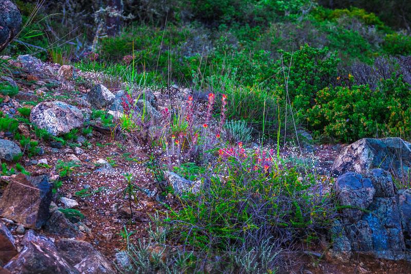 Rock Garden on San Geronimo Ridge