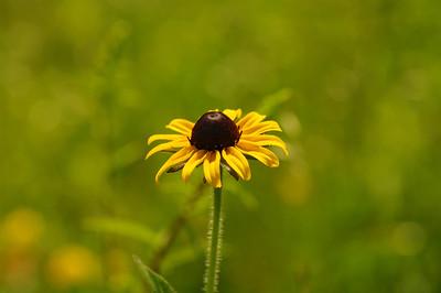 Flower in the Summer