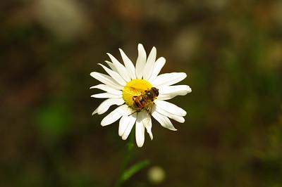 Pollination anyone?