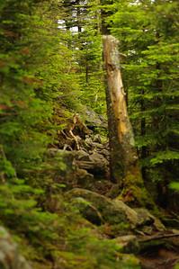 The Trail on Tecumseh
