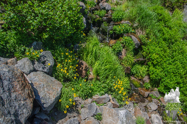 So lush between the boulders and out-crops...