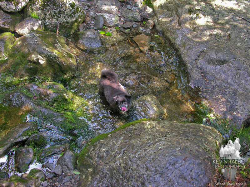 Emma cools off in the Cutler River.
