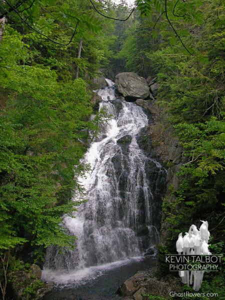 Huntington Ravine/Alpine Garden 6-25-07