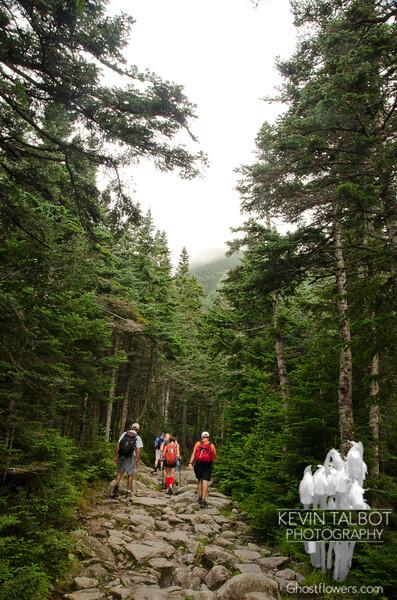More Tuckerman Ravine Trail.