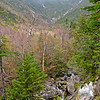 View up the Ammonoosuc Ravine from the trail.