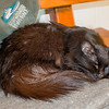 Marty is resting up. A black cat has much to do on Friday the 13th!