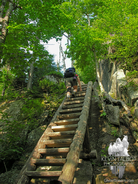 Ladder on the Boott Spur Trail.