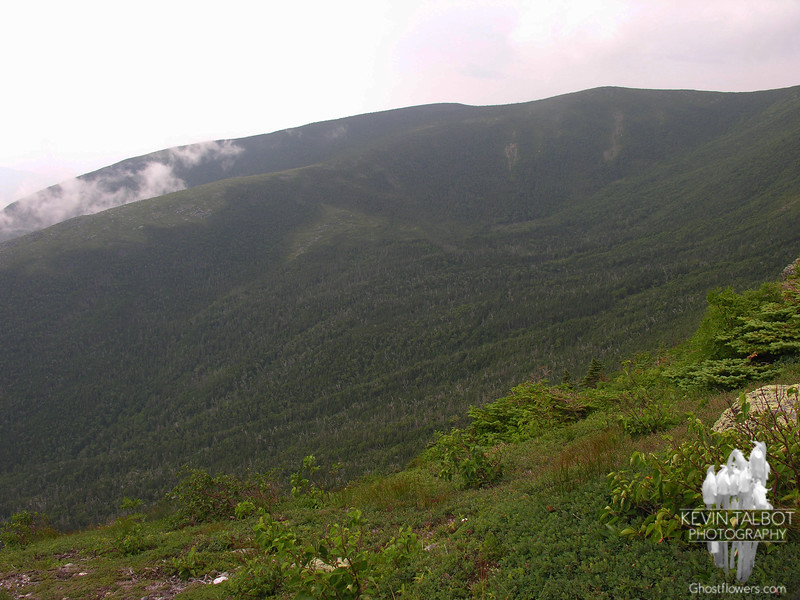 View south across the Gulf of Slides from the Boott Spur Trail.
