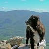 Mountain Dog!