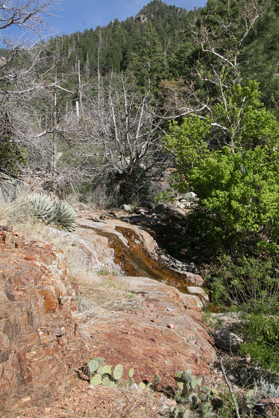 Much of this trail runs along a wash.  In winter water would be covering all of this rock falls.