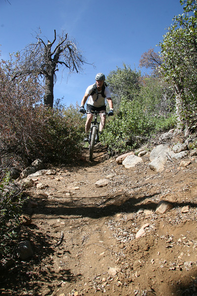 Easy section of single track trail.