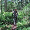 Several sections of the trail go through beds of ferns.  Lots and lots of green!
