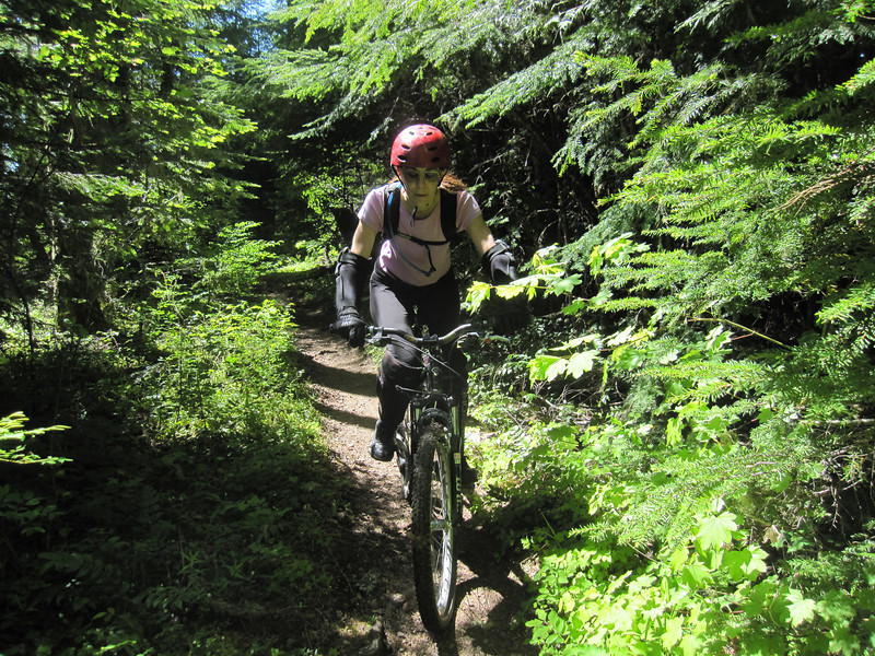 The ride starts at the halfway point of the Alpine Trail.  This can be accessed off of FR 683 which is an offshoot of the main FR 1910.