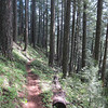 Just making our way down the mountain.  Here the forest opens up to allow light to come through.
