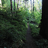 Here's a section that's so dense direct sunlight never gets through.  The trail is damp but not mushy or muddy.