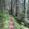 This bench cut section gives a good idea of the single track and also how steep the terrain is.