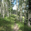 After entering Moonshine Park you will soon go through this small aspen glade.  This trail can be ridden very fast.