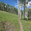 Looking back up towards the starting point after passing through the small aspen glade.  If you look closely, you'll see the trail is rough.