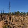 denver october 2010 (66 of 88)