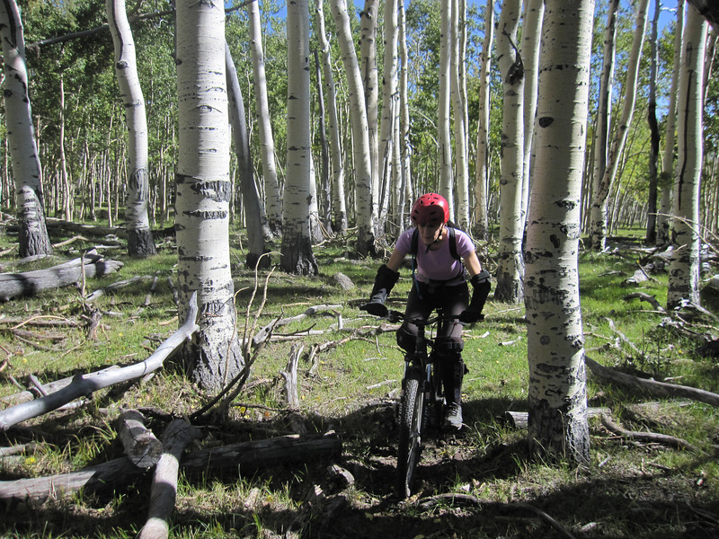 This leg cuts us through a mix of aspen glades and meadows.  It will terminate into a forest road.