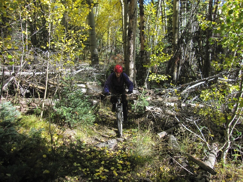 Just grinding through the woods trying to make progress.  High winds encourage us to complete the forest sections quickly.  We hear several trees fall off in the distance.