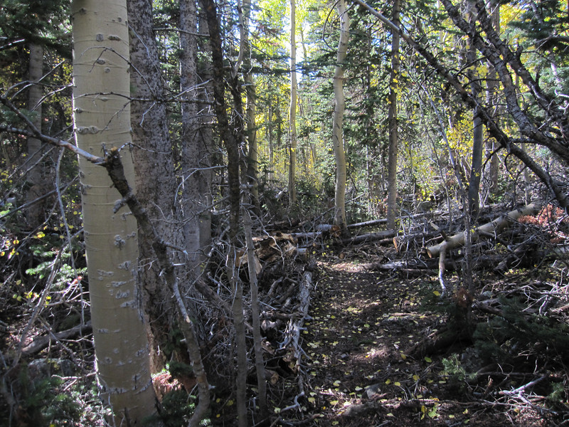 Continuation of single track through the woods.  Here we're just under 10K feet elevation.