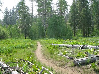 2008 Old Oak Ranch