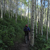 The aspen trees here are very healthy.  That isn't the case in other places.