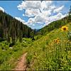 Two Elk Trail near Vail, Colorado July 2010