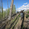 Coming through a section of woods badly damaged by a forest fire.  New regrowth is well underway.