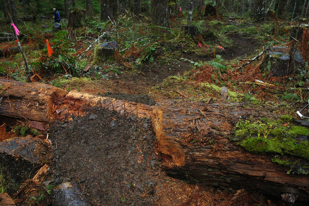 Lars' trail (unnamed trail) in Tillamook State Forest.  Rock was mined from nearby to fill up and over log crossings.